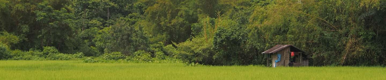 Petite maison dans une rizière du Laos, Frangipanier artisanat des villages