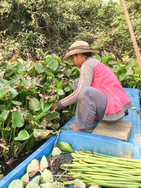 frangipanier-artisanat-equitable-jacinthe-eau-cambodge-12